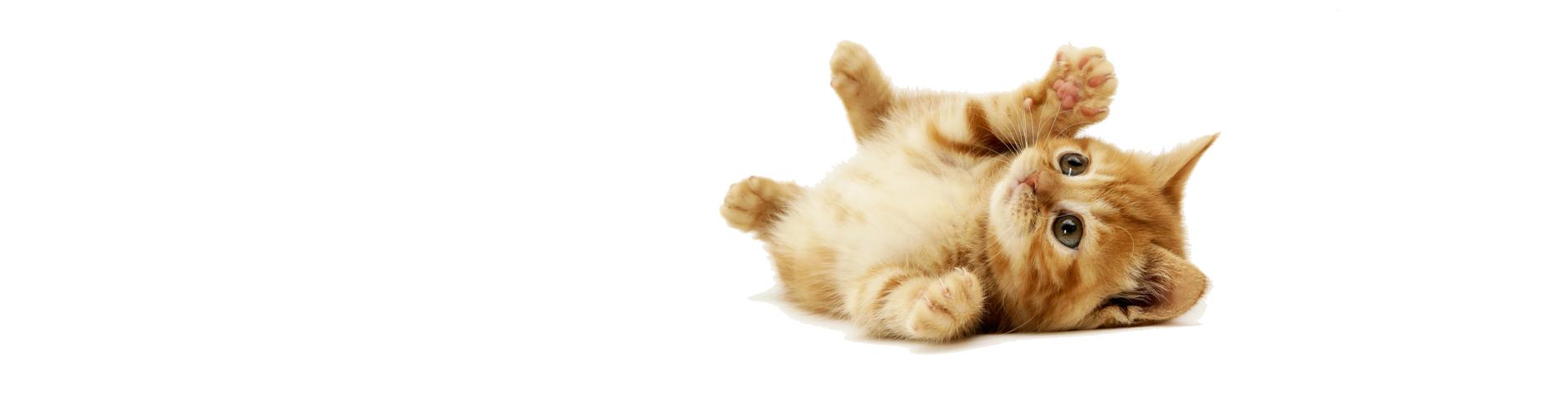 cat_slide4